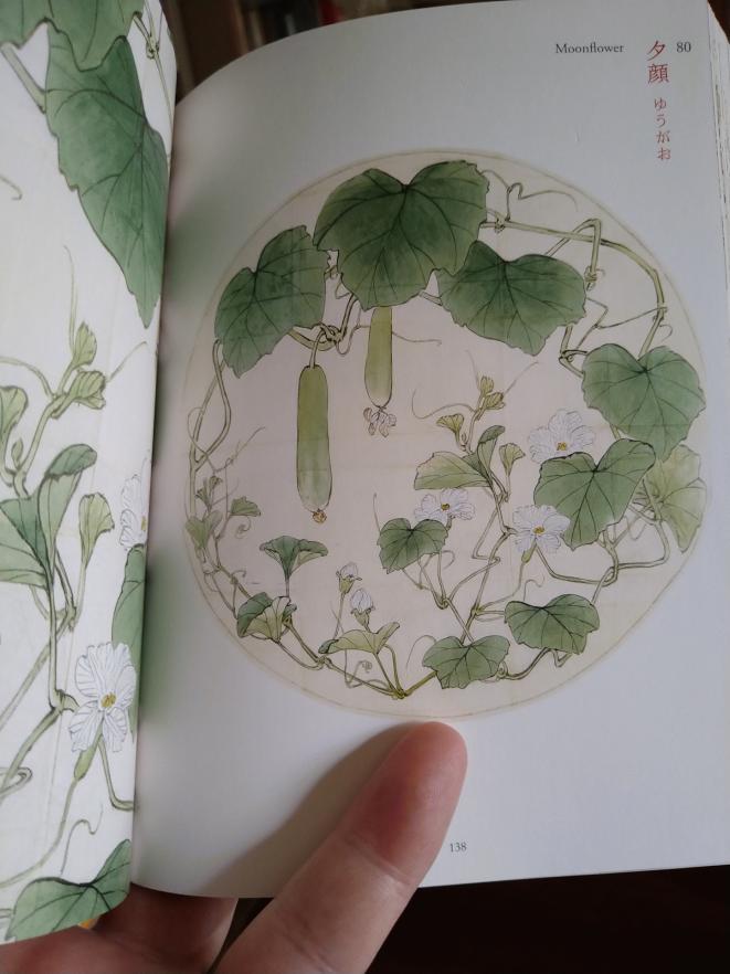 柴田是真の植物図 夕顔