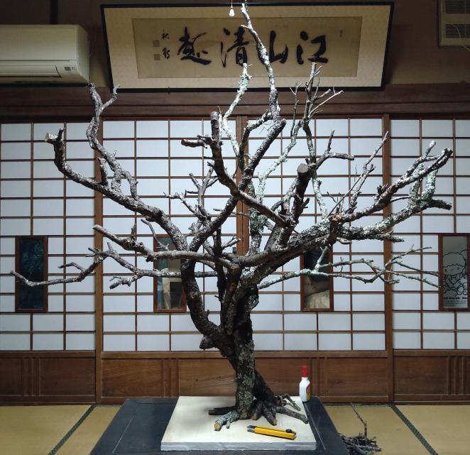 染井吉野の木組み全体